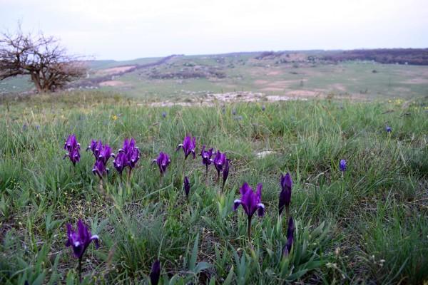 Гора Бударка