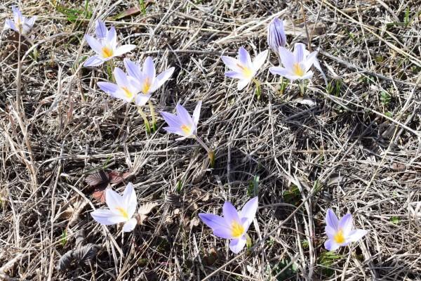 Ботанический заказник «Новомарьевская поляна»