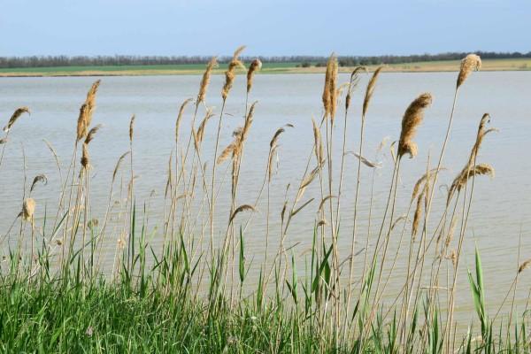Озеро Птичье