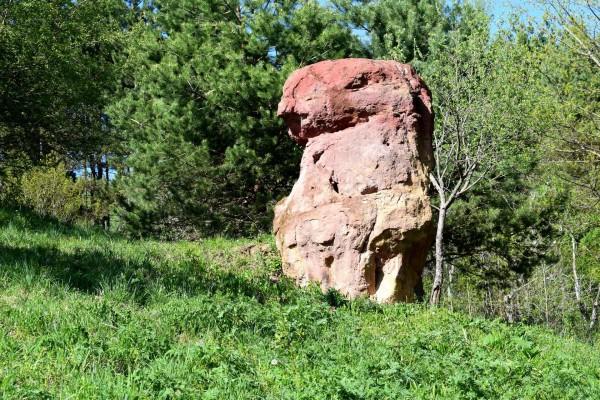 Каменные красные грибы