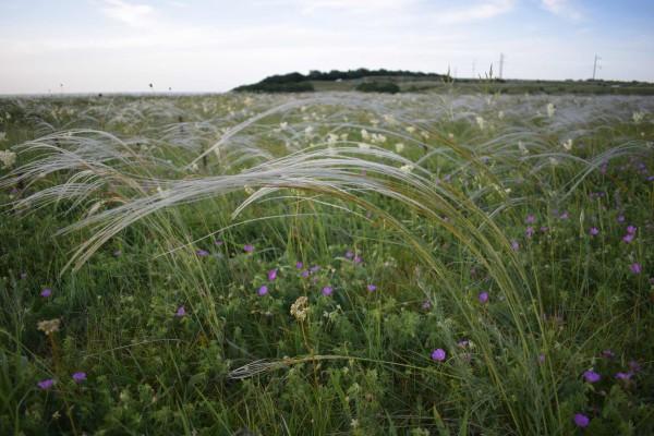 Вишневая поляна